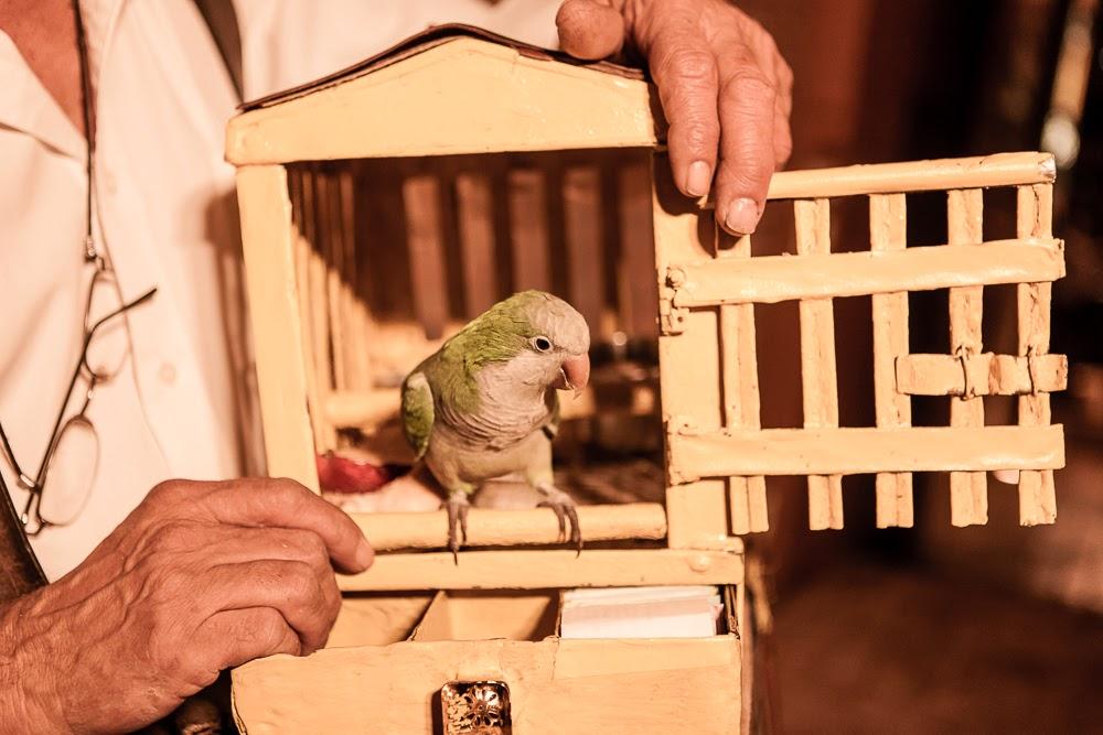 casamento-juliana-alisson-papagaio