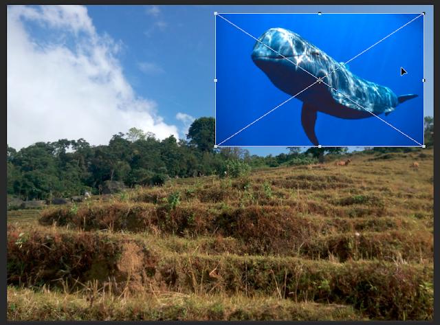 Membuat Foto Ikan di Langit dengan Photoshop