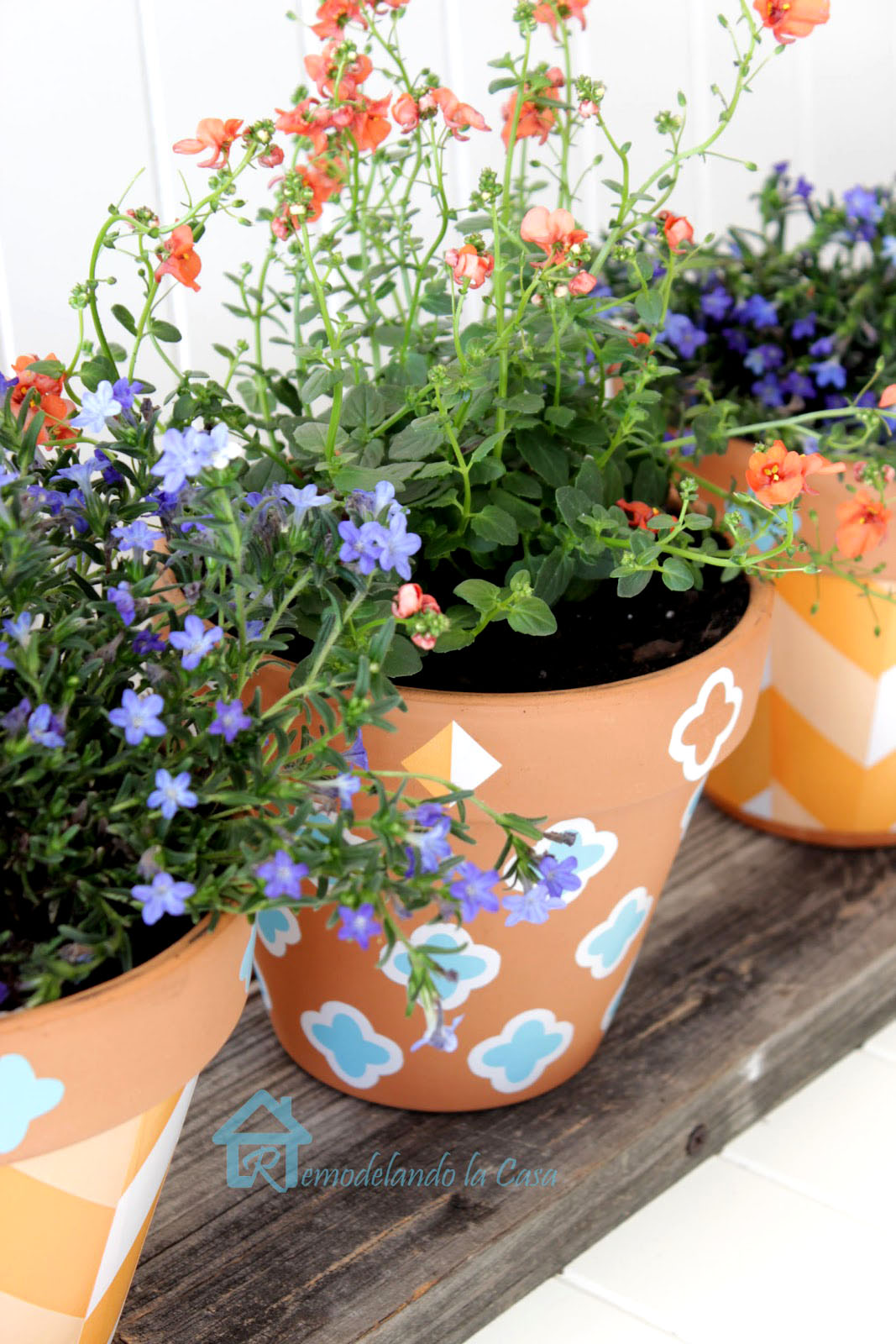 flowers displayed in terracotta planters