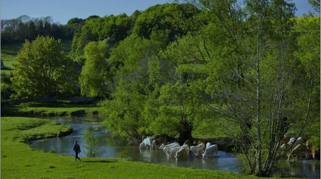 Жизнь в Англии от первого лица. В реках англии запрещено купаться. Английский коктейль
