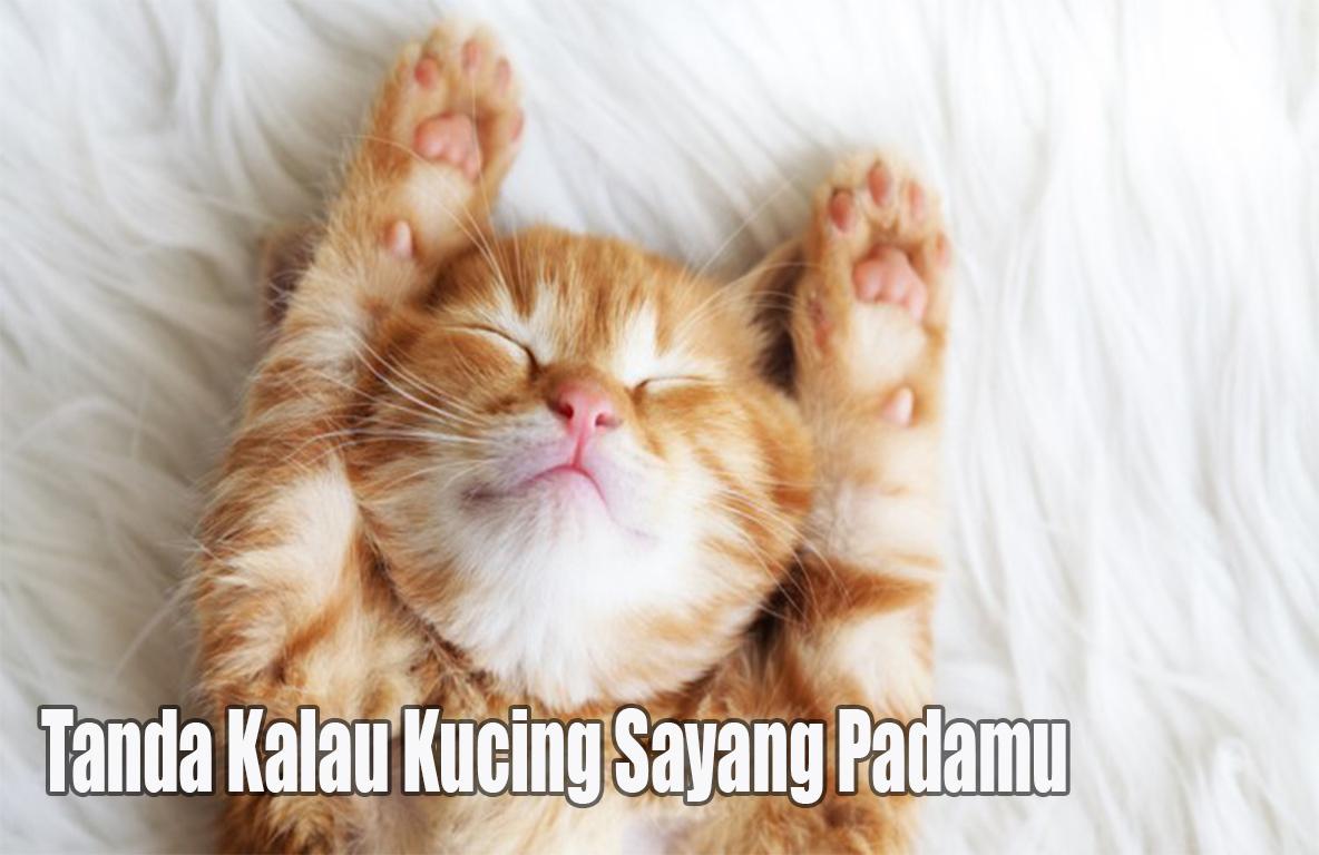 Tanda tanda kucing sayang padamu
