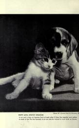 Cat and dogs friends picture from the book