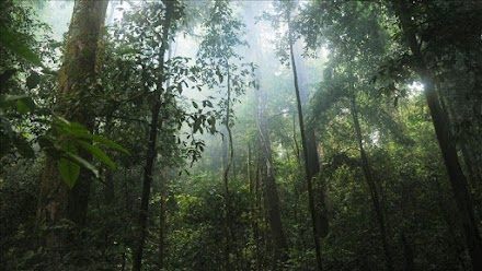 Evidence suggest 90M-year rainforest in Antarctica