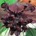 दुनिया के वो 5 अजीबोगरीब पौधे, जिनकी अनोखी बनावट देख हैरत में पड़ जाते हैं लोग