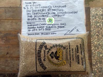 Benih padi yang dibeli ADI WIBOWO Pesawaran, Lampung. (Sebelum packing karung ).