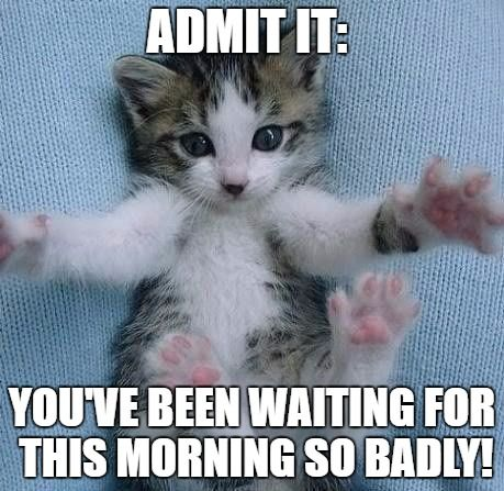 adorable cat meme for morning