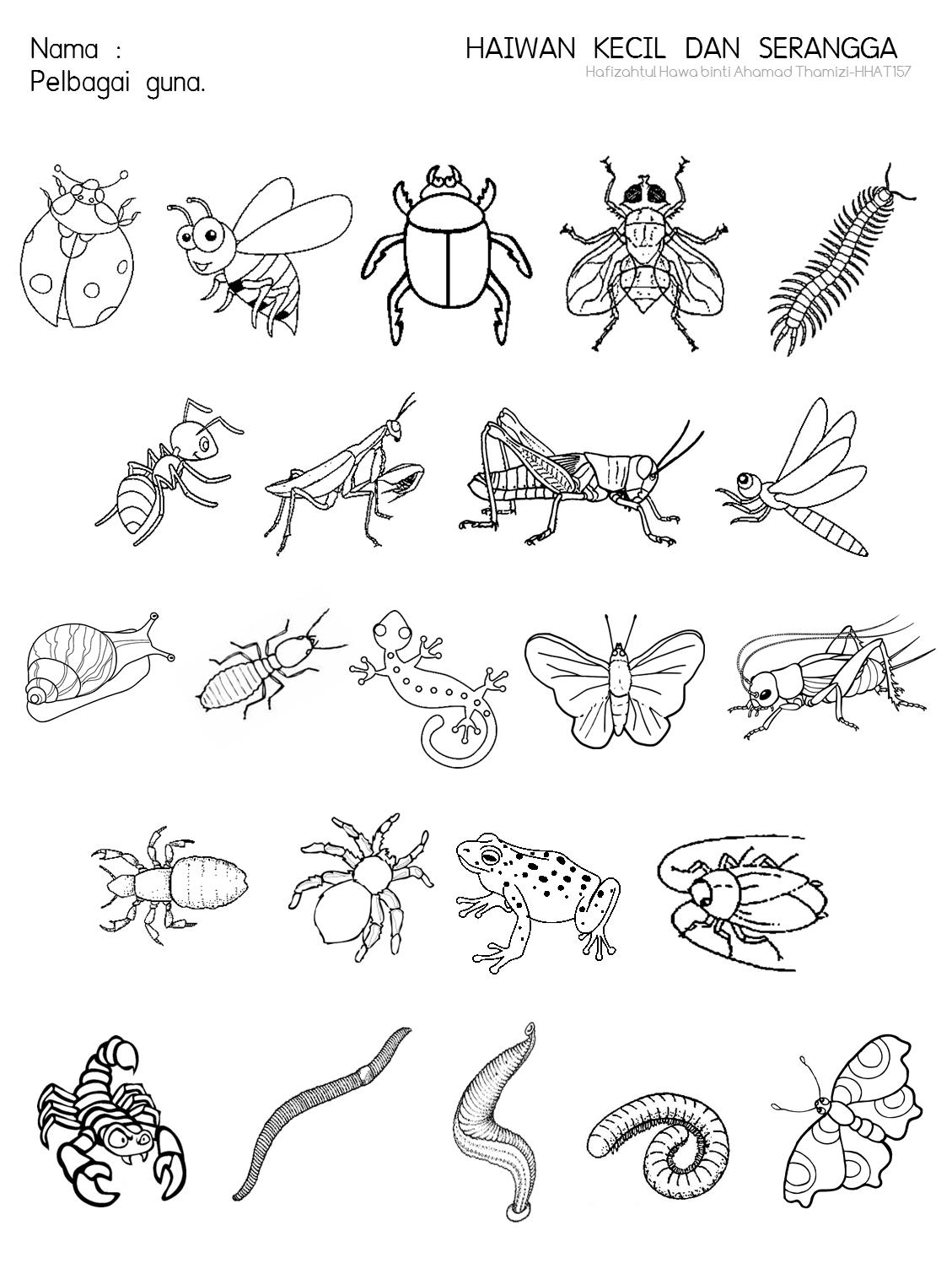 Cikgu Fieza Hhat157 Haiwan Kecil Amp Serangga