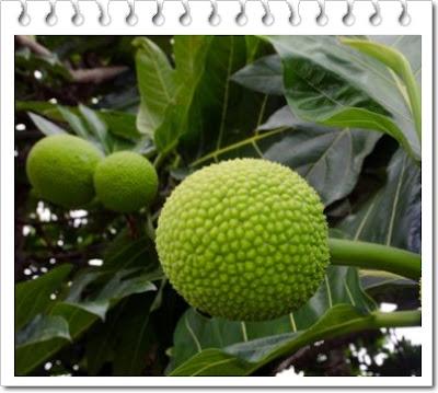 Manfaat buah sukun untuk kesehatan