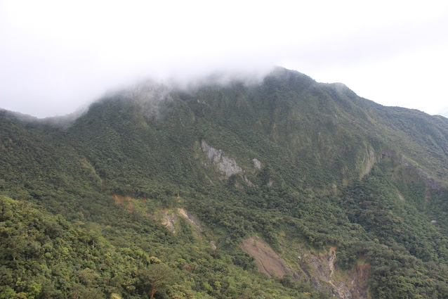 Pteridophytes: World of Ferns and Lycophytes - Survey site in Northern Luzon