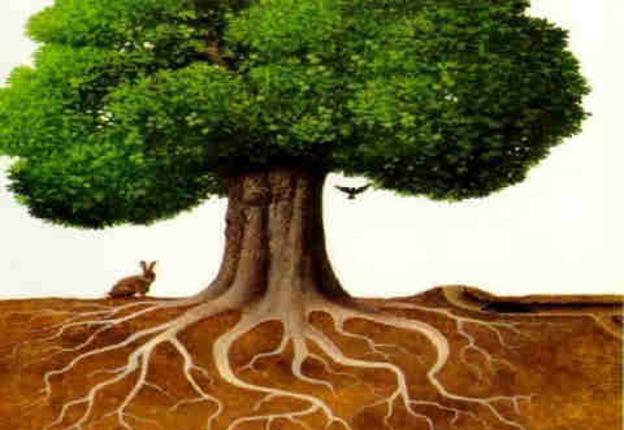 Reflexión: Sin raíz, no hay fruto