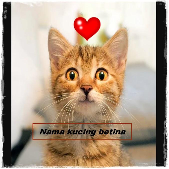 Nama Kucing Betina / Perempuan yang Lucu, Bagus dan Imut