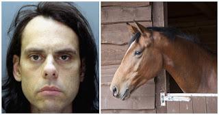 Άντρας μπήκε σε στάβλο και βiασε άλογο επειδή λέει το ζώο του έκλεισε το μάτι