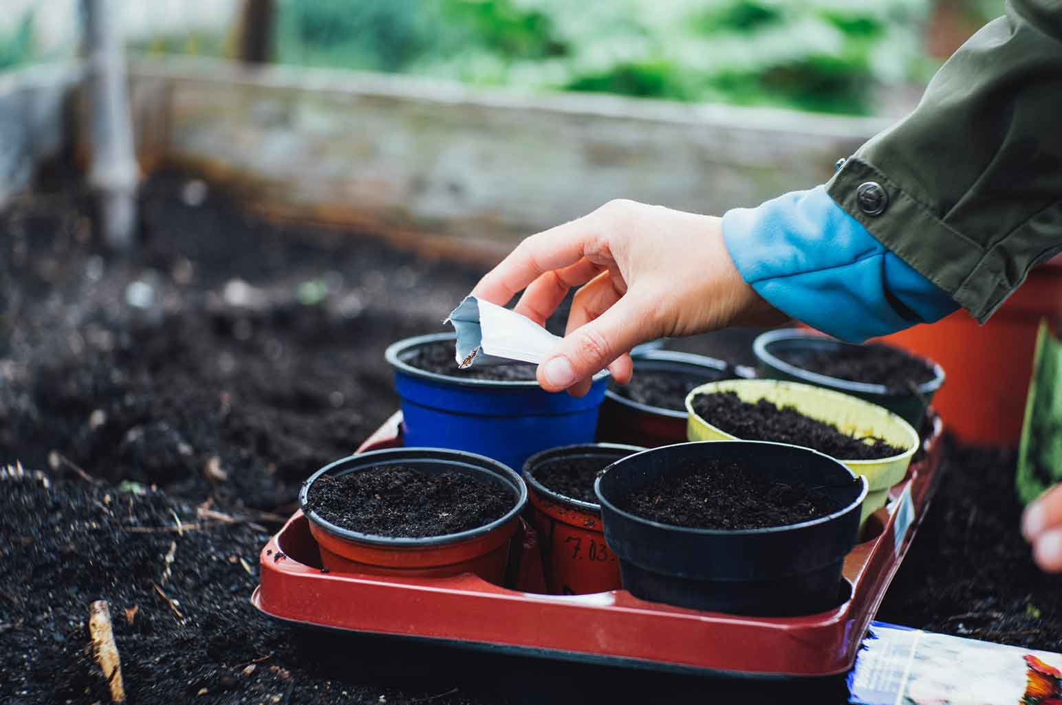 What You Need to Know About Urban Gardening