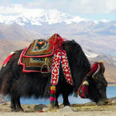Errance en Himalaya