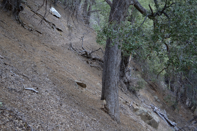 thin trail along a steep dirt slope