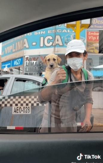 Limpiaparabrisas de Perú es captado cuidando a su perrito en su espalda mientras está trabajando