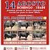 14-8-2016 Corrida de Toiros na Amareleja