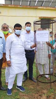 मंत्री श्री कावरे ने ग्राम डूंगरिया में वृक्षारोपण महा अभियान मे वृक्षारोपण किया