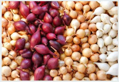 Proven Health Benefits Of Onion