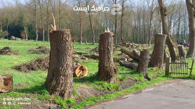 صناعة الورق تتسبب في قطع 80 ألف شجرة يوميا
