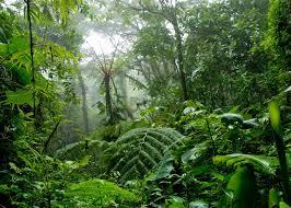 Indian Latest Forest Report ভারতের বিভিন্ন রাজ্যভিত্তিক বনভূমির রিপোর্ট ( 2018-2019 )