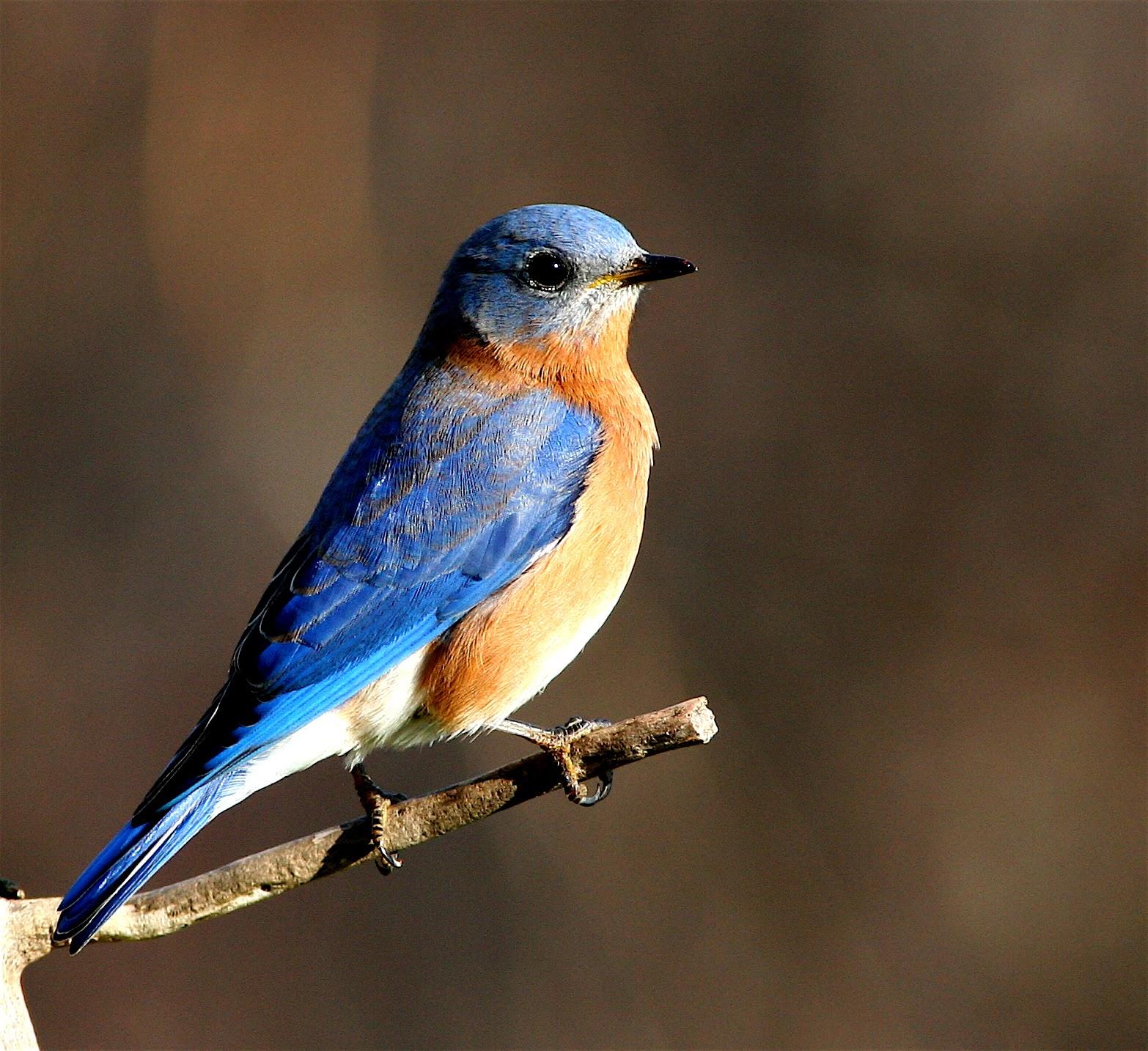 Backyard Birding Time: Yard bird list: 17 species! - Out ...