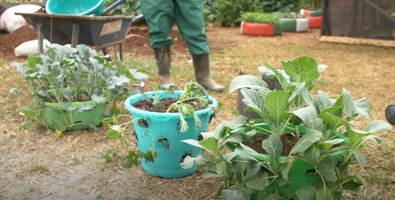 Micro kitchen gardens,