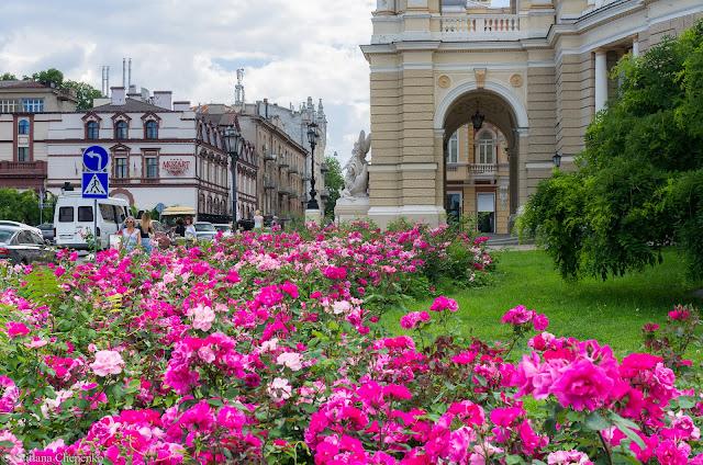 Троянди біля оперного в Одесі