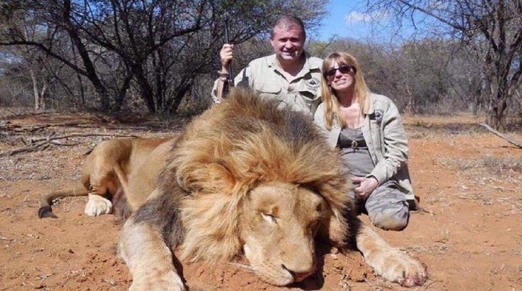 Uccidono un Leone, al rientro dalle Vacanze perdono il Lavoro.