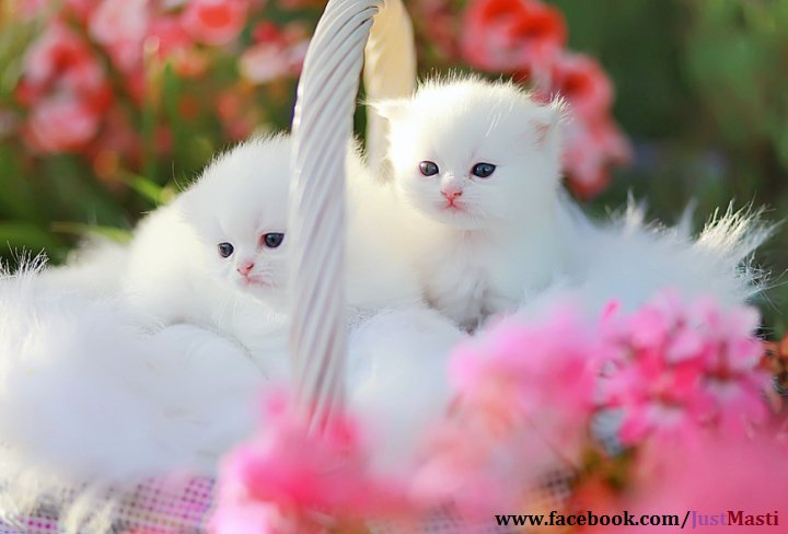 Excellent wallpapers: funny cats wallpapers free download.