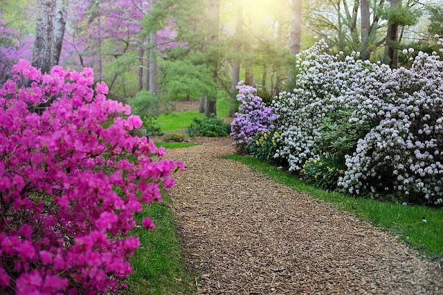 Camino con rododendros