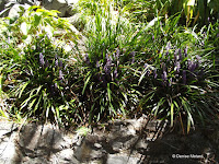 Mauve flowers, Wellington Botanic Garden, New Zealand