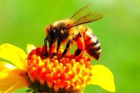 النحل ماهو أسلوب حياتها ؟ معلومات مذهلة