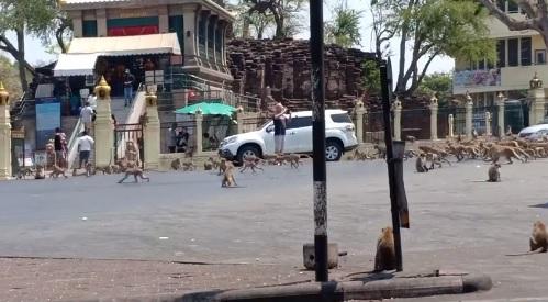 monos en calles