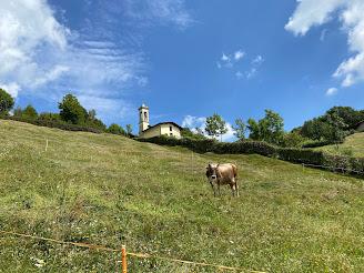 A cow in Salmezza.