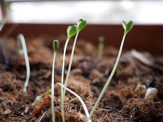 Lembar Kerja, LKS, Biologi, Pertumbuhan, Perkembangan, Kecambah