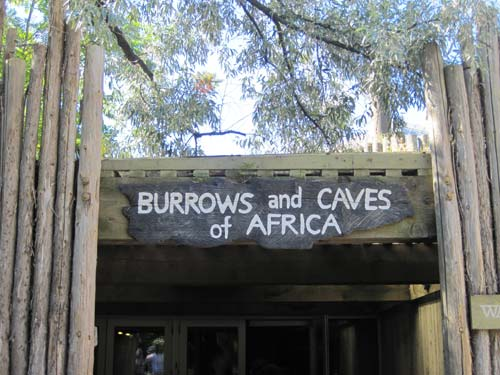 Burrows & Caves Of Africa