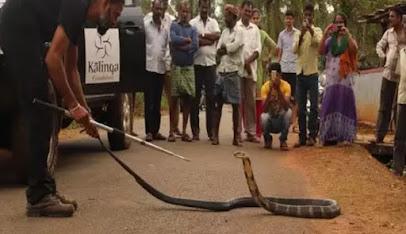 Gowri Shankar dan ular king cobra