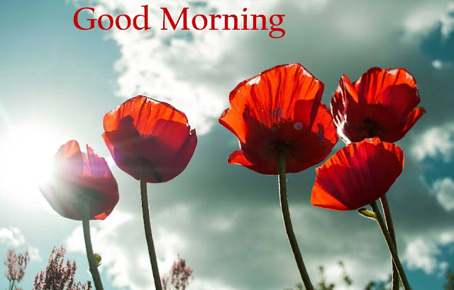 Best 110   Good Morning HD Images With Quotes 3D Picture Photos     good morning flower images free download