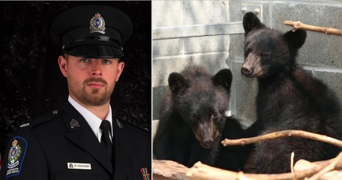 Canadian Conservation Officer Who Was Fired For Refusing To Kill Two Bear Cubs Wins Long Legal Battle