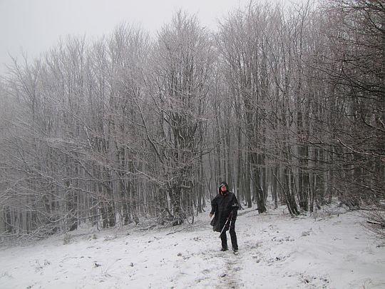 Wejście na polanę.