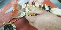 Removing lobster tails from shell