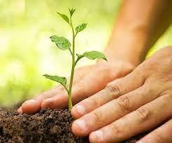 #JaunpurLive : वृक्ष है तो जीवन है : सुषमा