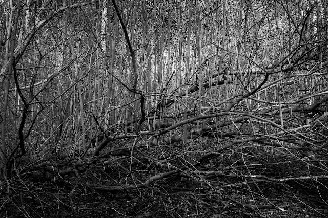 Old Wood, Skellingthorpe