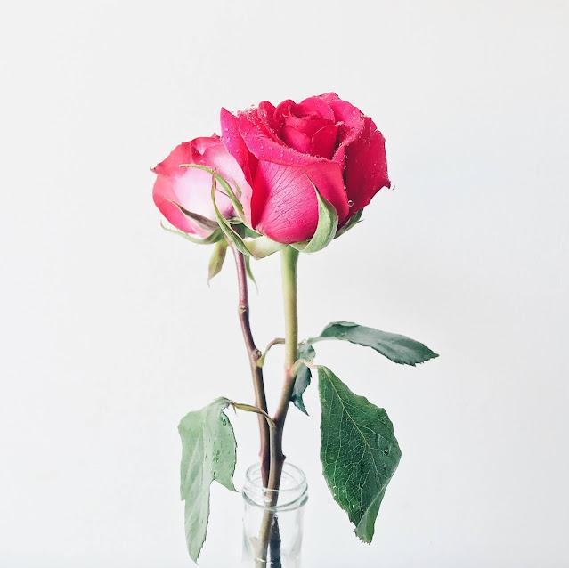 Download Beautiful wallpaper of pink rose