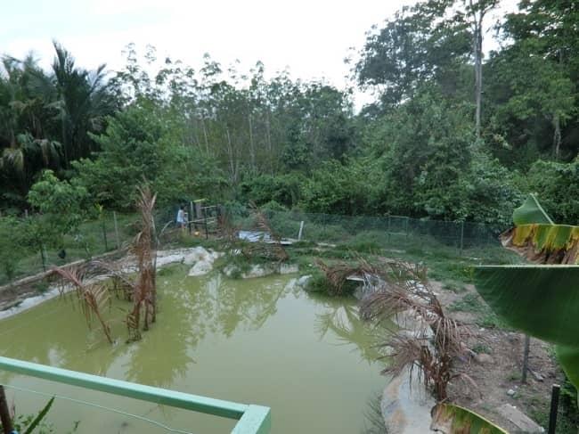 Kolam Ikan Tilapia
