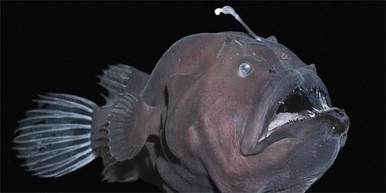 Criatura das Profundezas é encontrada em Praia nos EUA - Img 1