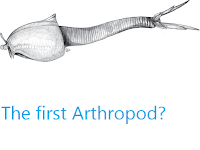 https://sciencythoughts.blogspot.com/2012/10/the-first-arthropod.html