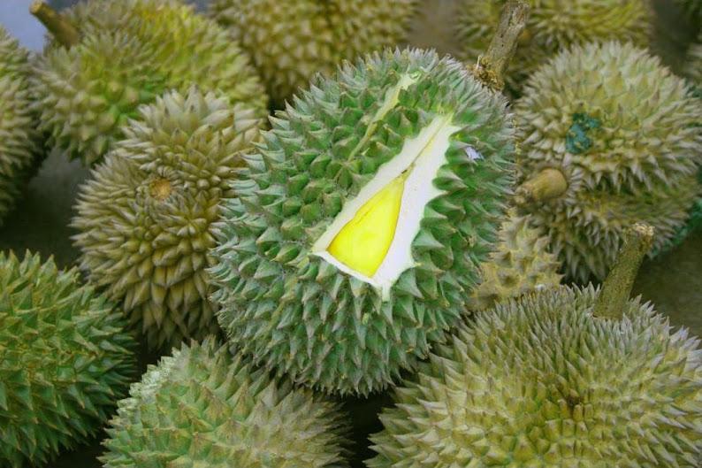 Bibit Durian Musangking Kaki 3 Tiga Palembang