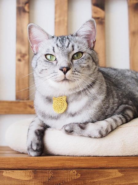 金メダルを首につけたサバトラ猫